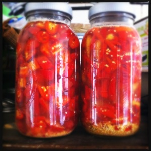 fermented red peppers for hot sauce